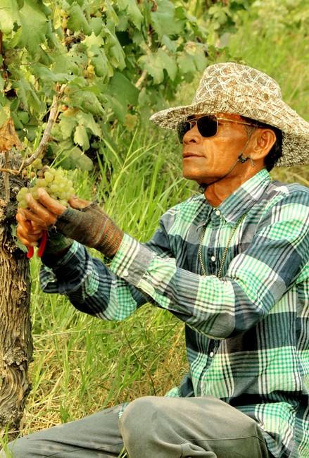 Work-in-the-Vineyards-2