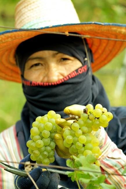 Work-in-the-Vineyards-4