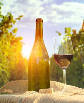 Thailand Wine tours